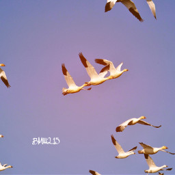 sky clear sunnyeffect beautifulday birds