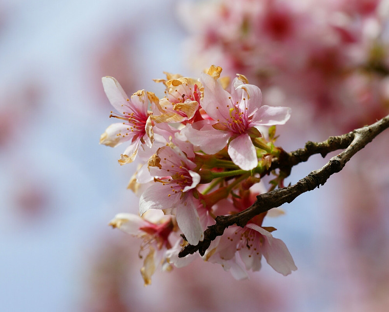 #photography #nature #spring #blossom   #freetoedit  #emotions