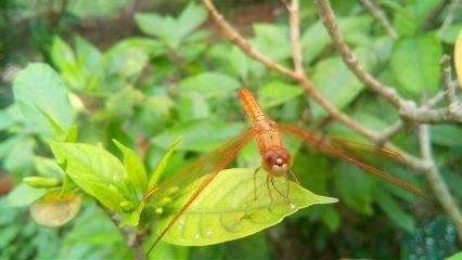 spring dragonfly freetoedit animal