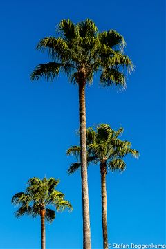 Palmtrees Nature Tumblr California Outdoors Photography
