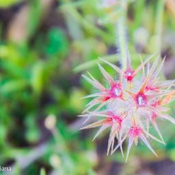 natura scampagnata passeggiando passione passione_fotografica