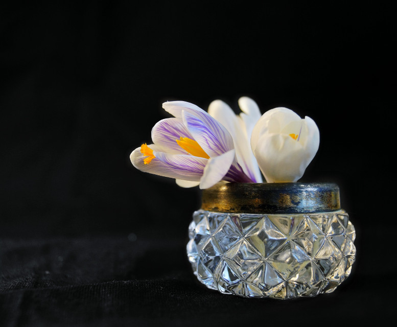 Tiny flowers in a lovely little vase #nature #flower #flowers #crystal #spring