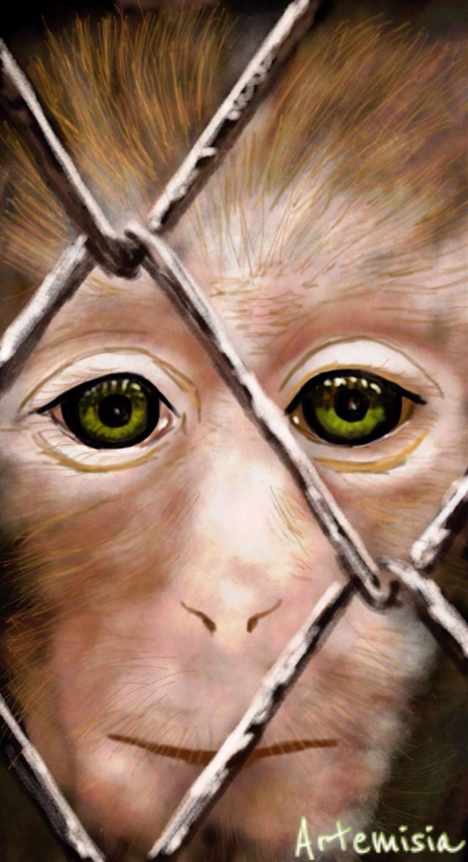 Regretting freedom ....  Vote and repost if you like ! #wdpzooanimals #drawing #draw #petsandanimals #monkeys  #sadness #digitalart