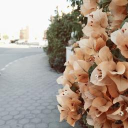pavement sidewalk street flowers trees