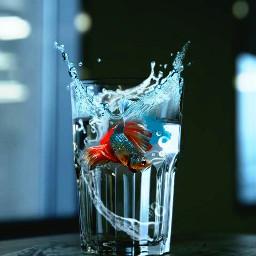 ftecupofwater fish splash water mirrored