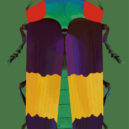 colorful bugs dso dsonly sketch