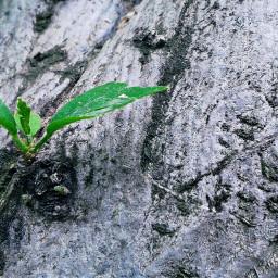 earthday freetoedit nature green