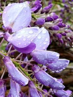 rain drops raindrops flower nature
