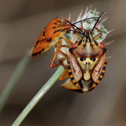 canon insect summer mating faces