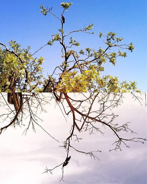 nature seasons art trees welcomesummer
