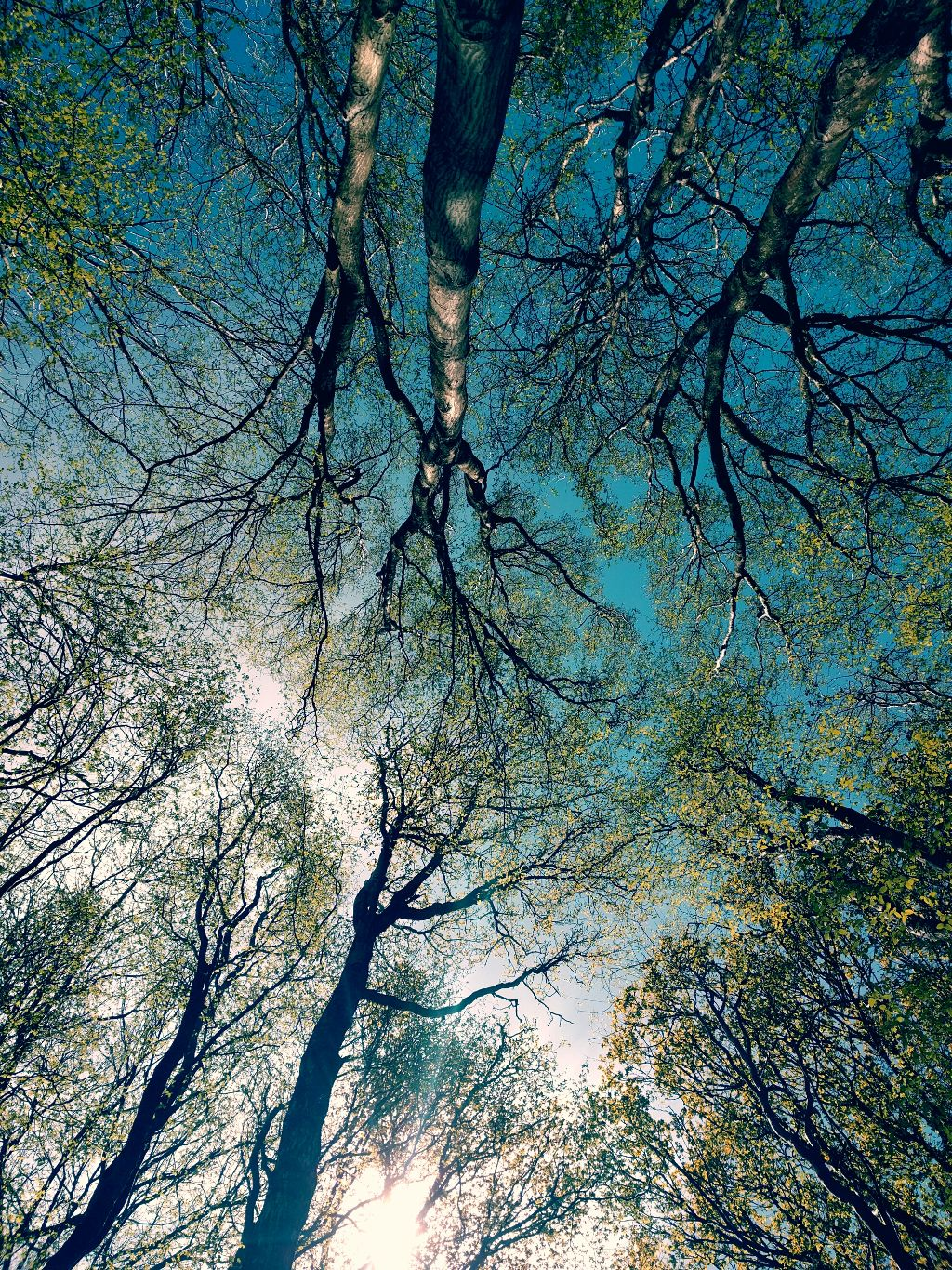 forest spring trees color life - Image by Nekoma