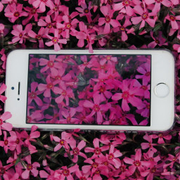spring photography flower nature vscocam cute beautiful iphone pink emotions love