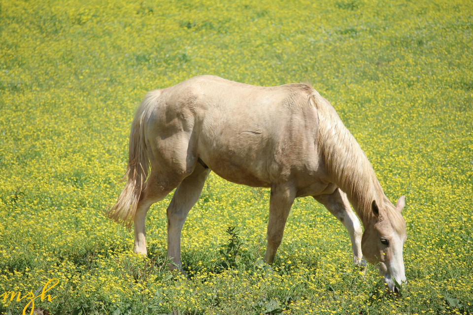 #horse #farm #flowers #nature  #petsandanimals  #photography  #spring  #landscape