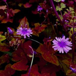 flowers changecolor changeisgood editedwithpicsart editedeffect freetoedit