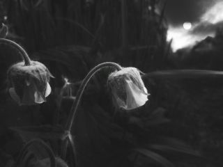blackandwhite flower emotions photography nature